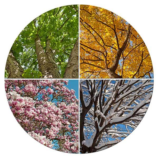 4 Jahreszeiten im Kreis
