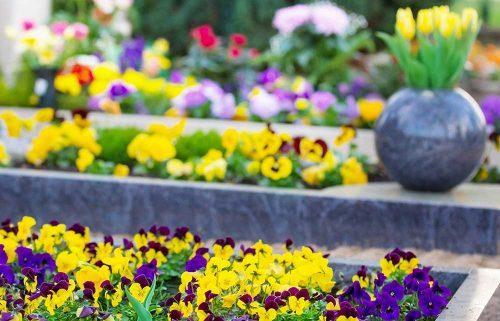 Gräber mit Stiefmütterchen in Gelb und Lila