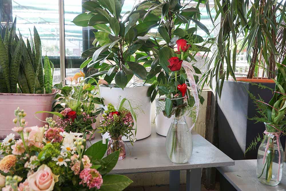 Pflanzenmarkt Wachtendonk innen