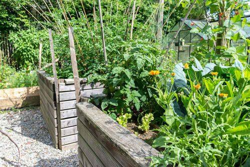Hochbeete in einem Nutzgarten